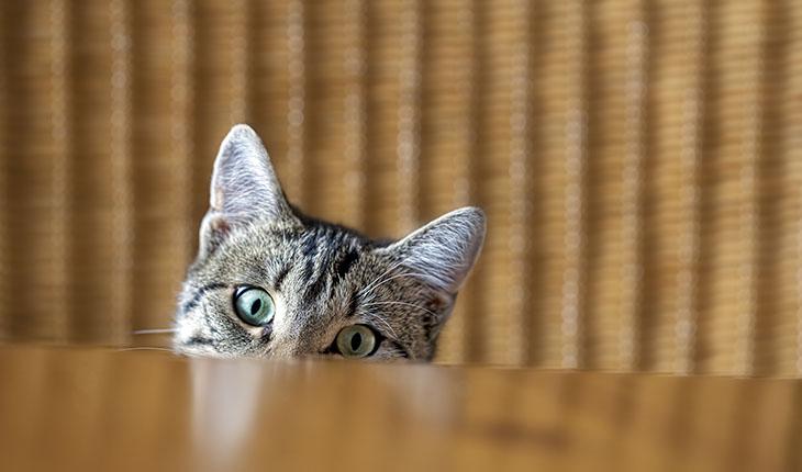 Katturin eller skadedjur som orsakar lukt och föroreningar